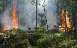 Das Bild zeigt ein Feuer im Wald